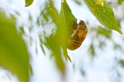 bug-body(233).jpg